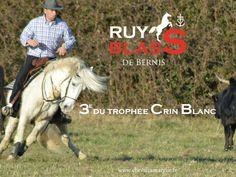 #cheval #Horse #Camargue  www.chevalcamargue.fr