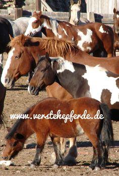 Tipps und Anregungen für Horsemanship, Bodenarbeit, Beziehung zum Pferd