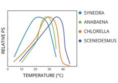 Temperature affects the photosynthetic rates of different algae.