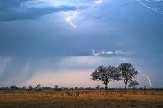 Photographic safaris to Zimbabwe. image: Makalolo Camp