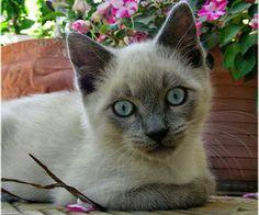 Olhos azuis da cor do mar!