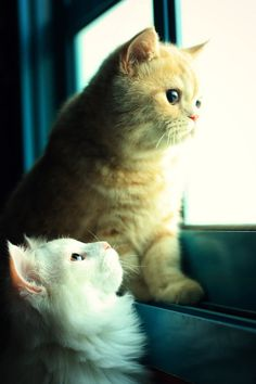 "White Cat... ""HEY WHATS THE BIRD DOING?""  Orange Cat...""Leaving thanks to you loud mouth!"""
