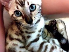 Those Beautiful Eyes!!!!!!❤️❤️❤️❤️❤️❤️❤️❤️ Kitties!!!!!