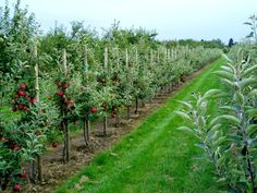 Grand Serre, Espalier, Organic Farming, Fruit And Veg, Garden Projects, Vineyard, Tropical, Outdoor Structures, Passion