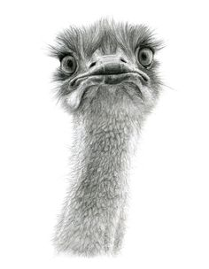 Cute Ostrich by sschukina on deviantART