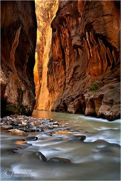 Canyon of Wonders, Zion NP , Utah