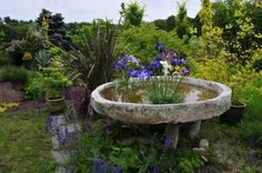 The beautiful display gardens included this iris arrangement in a water feature made of hypertufa (equal parts Portland cement, perlite and peatmoss) Garden Crafts, Garden Projects, Garden Ideas, Bird Bath Planter, Concrete Art, Concrete Fountains, Papercrete, Pond Water Features, Paludarium