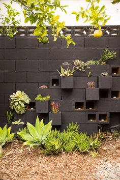 Build an affordable succulent wall planter using cinderblocks.
