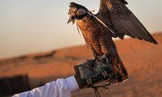 Falconry is a traditional part of Bedouin culture  #dubai #desert #safari