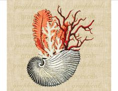 Vintage white shell Coral Seaweed decor Digital par graphicals, $1.80