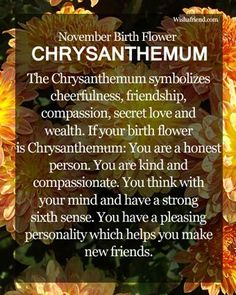 November Birth Flower : Chrysanthemum Which is the Birth Flower for November? Know about the November Birth Flower Chrysanthemum here. Find the meaning of November Flowers here. Birthday Quotes For Daughter, Daughter Quotes, Husband Birthday, November Birthday, Birthday Month, Happy Birthday, Baby Born Quotes, November Flower, November Birth Flowers