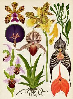 Emily Hughes e Katie Scott: l'illustrazione è botanica : IL Magazine