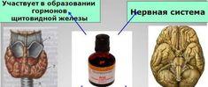 действие йода на организм