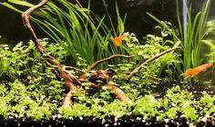 Un trozo de río tropical en 28l #aquascape #acuario #aquarium