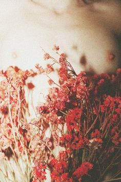 dried flowers | Tumblr
