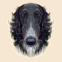 grey afghan hound - Google Search