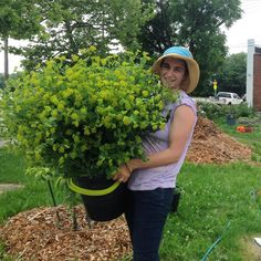 hillenhomestead#bupleurum Flower Farmer, How To Get Warm, Say Hello, Spring Flowers, June, Instagram Posts