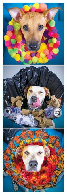 """Is there anything more embarrassing for a dog than the dreaded """"cone of shame?"""" We might be projecting, but it certainly seems like they feel not only silly but slightly mortified. And if you're a dog in a shelter recovering from a spay or neuter, well, you can just forget about finding your furever home while sporting one of those plastic monstrosities."""