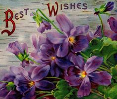 Beautiful Antique Purple Violet Greetings Postcard Early 1900s. $4.00, via Etsy.