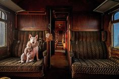 Urbex Dog – Alice van Kempen Is Exploring Abandoned Places with her Bull Terrier…