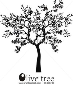 stock-photo-olive-tree-isolated-on-white-background-86671798.jpg 401×470 pixels
