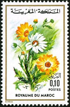 Stamp: Chrysanthemum carinatum (Morocco) (Flora) Mi:MA 802,Yt:MA 726 Chrysanthemum, Valley Of Flowers, Flower Stamp, You Are The World, Vintage Stamps, Butterfly Flowers, Stamp Collecting, Collections, 1975