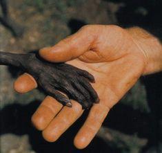 Google Afbeeldingen resultaat voor http://bsv.org.in/images/uganda-poor-people.jpg