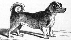 10. Turnspit Dog  Photo by:BookDome.com This short-legged dog earned its name from its job of running on a wheel called a