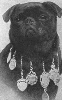Queen Victoria's Pet Pug Victorian Era Portrait