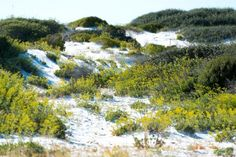 St. Andrews State Park   SoWal.com - Insider's Guide for South Walton Beaches & Scenic 30A