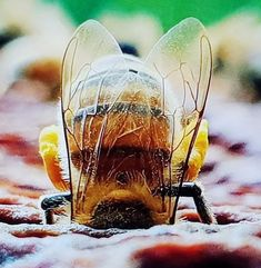 """Don't stick your head in the """"honey"""", there is still hope to live, laugh, love and have faith.. Wishing everyone a great week... :) #love #faith #hope #honey #bees Nature Animals, Animals And Pets, Cute Animals, Beautiful Creatures, Animals Beautiful, Buzz Bee, Bee Do, I Love Bees, Bees And Wasps"""