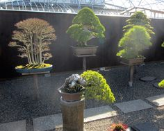 Suzuki's Bonsai garden in Obuse