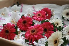 Gerbera wrist corsages - gerberas are available for July Scottish weddings. Contact The Stockbridge Flower Company, Edinburgh for more details. Scottish Weddings, Flower Company, July Wedding, Rustic Flowers, Wrist Corsage, Corsages, Gerbera, Edinburgh, Wedding Flowers