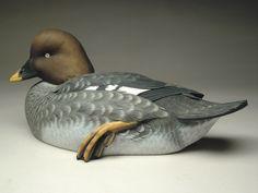 Common Goldeneye Hen 2011