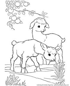 Farm animal coloring page Goat | Kid goats