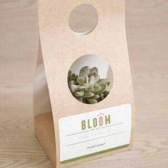 Cactus Farm, Cactus Decor, Flower Box Gift, Flower Boxes, Flower Packaging, Box Packaging, Plant Projects, Plant Science, Creative Gift Wrapping
