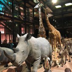 The #path of #animals #gallery of #evolution in the #museum of #naturalhistory #jardindesplants #rhinoceros #giraffe #zebras in #Paris #IgersParis #Parismaville #Parisjetaime #villedeParis #parisfind #thestreetsofparis (at Muséum national d'Histoire naturelle)