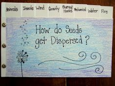 how do seeds get dispersed foldable -The Inspired Classroom and other science activity ideas