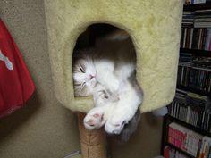 猫バカとバカ猫:ヨタふみ 陸