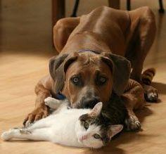 Dog & Cat Dental Health - AZ Vet Dentists