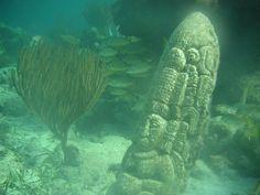 Bay Islands #Underwater #Museum http://www.atlasobscura.com/places/bay-islands-underwater-museum via @atlasobscura