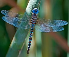 I ❤ dragonflies . . .