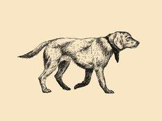 Dog by Matthew Smith #Design Popular #Dribbble #shots