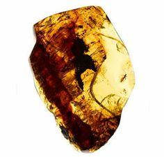 Amber (barnsteen) de een van de handels waren van de vikingen