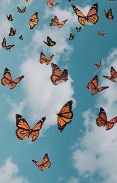 Wallpaper Pastel, Butterfly Wallpaper Iphone, Trippy Wallpaper, Sunflower Wallpaper, Summer Wallpaper, Cute Patterns Wallpaper, Iphone Background Wallpaper, Cute Ipad Wallpaper, Beauty Iphone Wallpaper