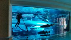 Go behind the scenes at Golden Nugget Las Vegas' Shark Tank Tours every Wednesday.