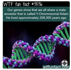 WTF Fun facts Oh and I wonder why everyone is F** tripping about race! WTF Fun facts Oh and I wonder why everyone is F** tripping about race! Wtf Fun Facts, Funny Facts, Crazy Facts, Random Facts, Science Facts, Weird Science, The More You Know, Good To Know, Interesting Information
