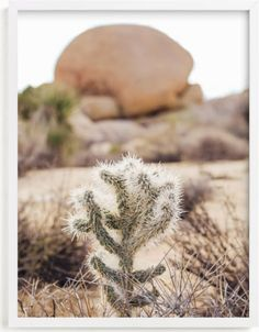 Limited Edition Fine Art Prints & Wall Art   Minted