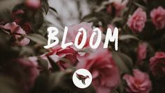 Dabin - Bloom (Lyrics) ft. Dia Frampton Yours Lyrics, Cool Lyrics, Music Lyrics, Happier Lyrics, Kelsea Ballerini, David Guetta, Chainsmokers, Alternative Music
