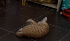 OMG this might be the funniest cat gif ever.